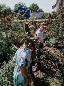 Durch den Garten streifen und Pflanzen gucken.